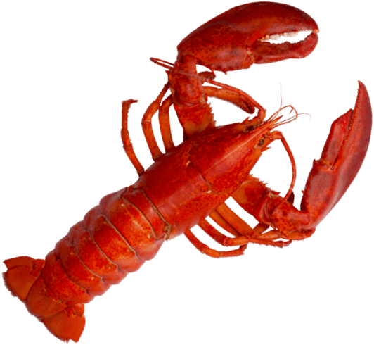 lobster@2x